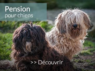 Pension pour chiens